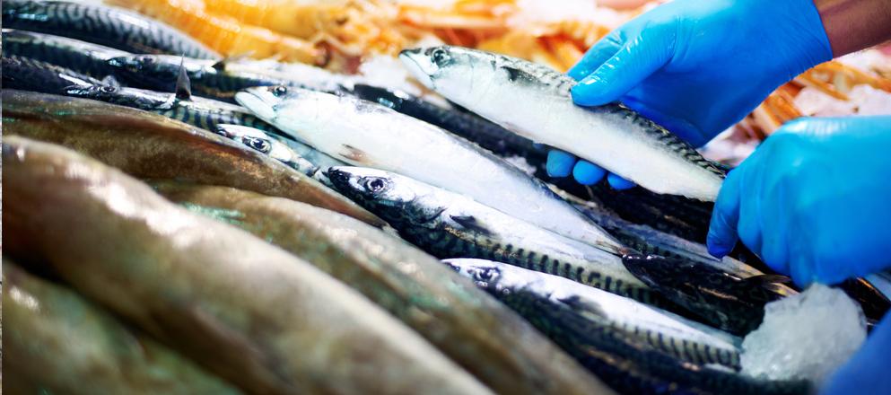 Steve Cummins Tassea Seafood - Transworld Resources